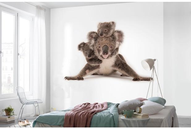 Komar National Geographic Koala 300 x 280 cm