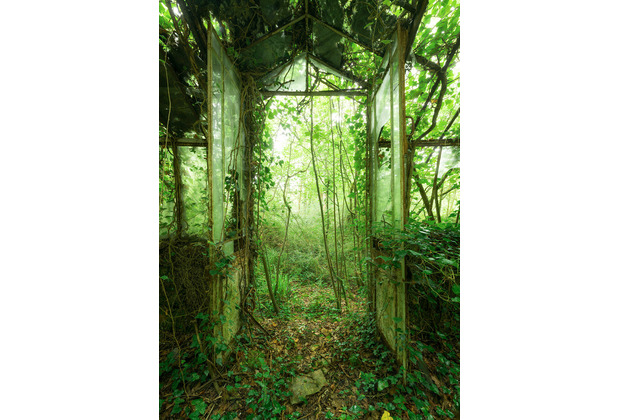 "Komar Stefan Hefele / Lost Places Vlies Fototapete ""Greenhouse\"" 200 x 280 cm"