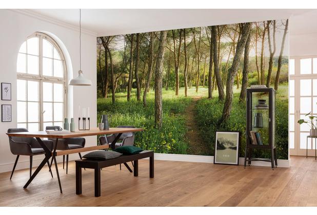 "Komar Vlies Fototapete \""Blütenzauberwald\"" 450 x 280 cm"