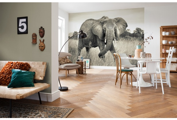 Komar Vlies Fototapete Elephant 248 x 368 cm