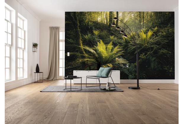 "Komar Vlies Fototapete \""Fjordland Woods\"" 450 x 280 cm"