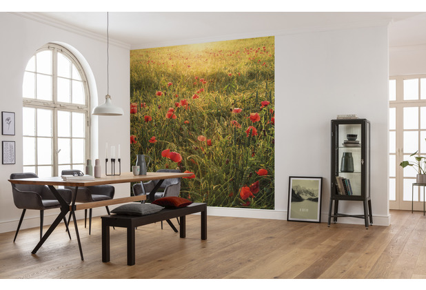 "Komar Vlies Fototapete \""Poppy World\"" 250 x 280 cm"