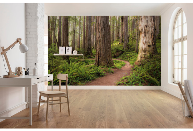 "Komar Vlies Fototapete \""Redwood Trail\"" 450 x 280 cm"