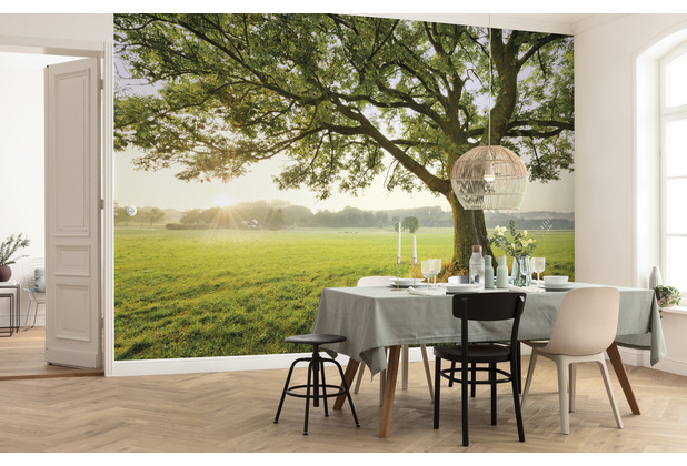 "Komar Vlies Fototapete \""The Magic Tree\"" 450 x 280 cm"