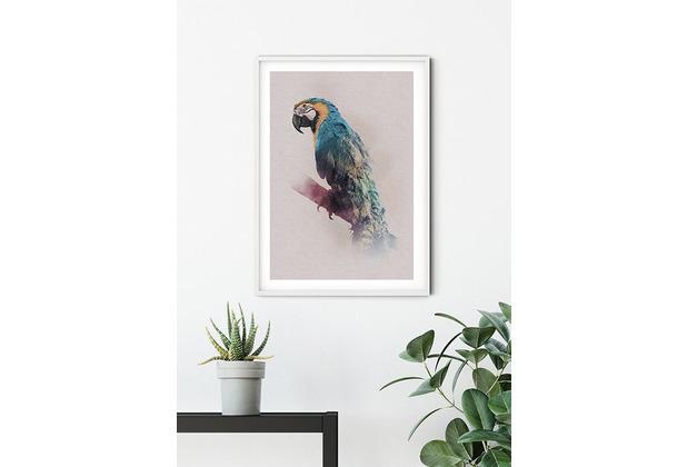 Komar Wandbild Animals Paradise Parrot 30 x 40 cm