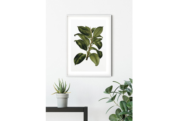 Komar Wandbild Elastica Tree 30 x 40 cm