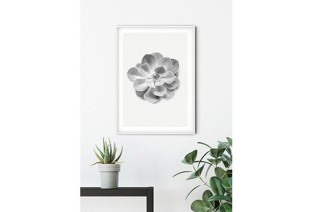 Komar Wandbild Succulent Aeonium 30 x 40 cm