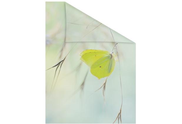 Lichtblick Fensterfolie selbstklebend, Sichtschutz, Schmetterling - Grün Breite: 100 cm, Länge: 100 cm