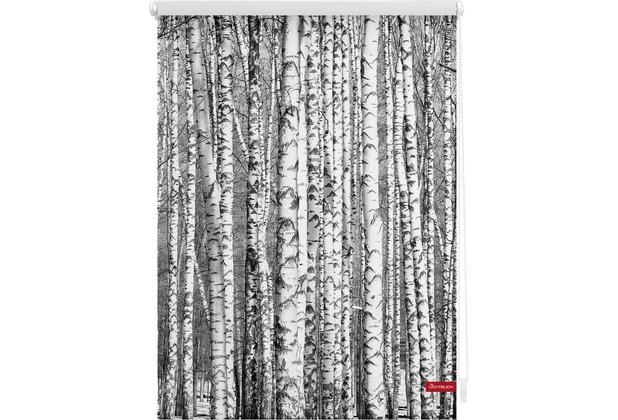 Lichtblick Rollo Klemmfix, ohne Bohren, blickdicht, Birken - Schwarz-Weiß Breite: 100 cm