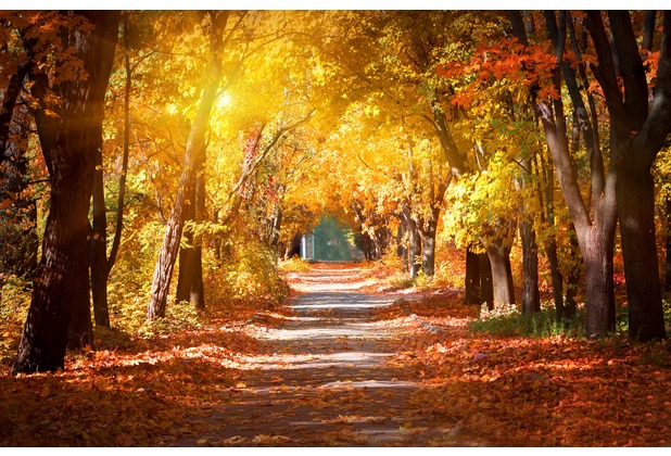 papermoon Fototapete Alley in the Autumn Park 7 Bahnen 350 x 260 cm Vlies