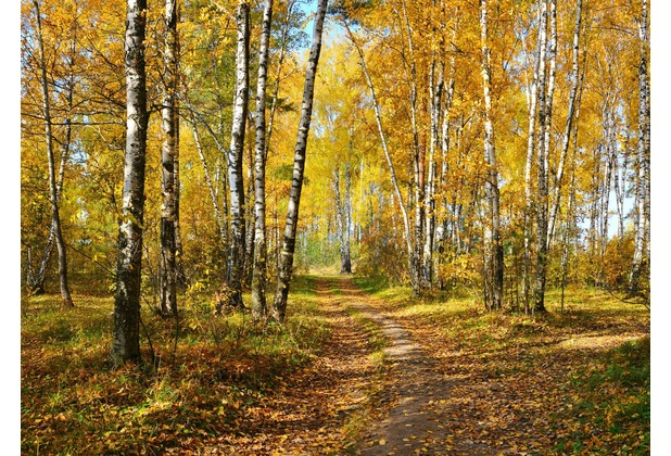 papermoon Fototapete Autumn Forest 7 Bahnen 350 x 260 cm Vlies