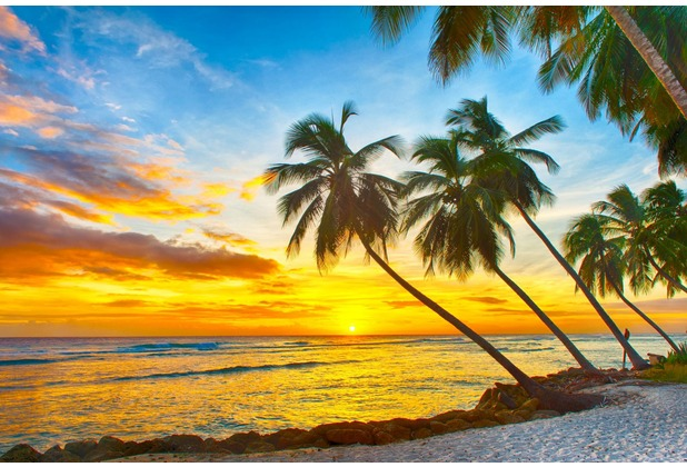 papermoon Fototapete Barbados Palm Beach 7 Bahnen 350 x 260 cm Vlies