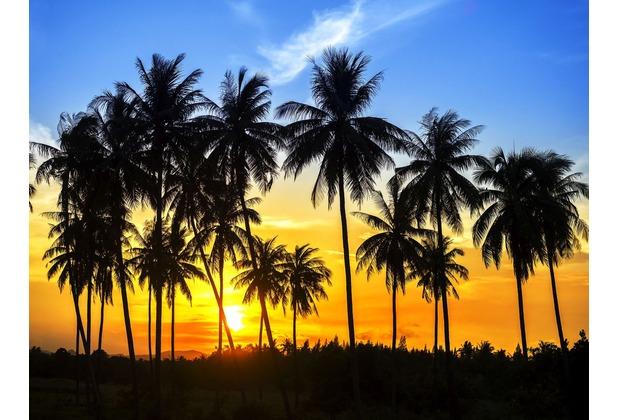 papermoon Fototapete Coconut Palm Trees 7 Bahnen 350 x 260 cm Vlies