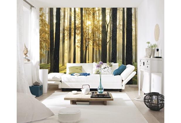 papermoon Fototapete 7 Bahnen, Digitaldruck Sunny Forest, Tapetenbahn 50cm, Spezial Tapetenpapier, BlueBack 350 x 260 cm