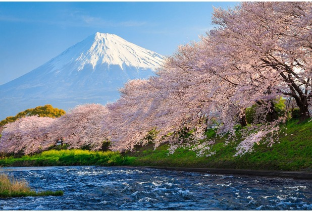 papermoon Fototapete Fuji and Sakura 7 Bahnen 350 x 260 cm Vlies