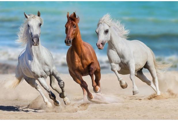 papermoon Fototapete Horse Herd Run Gallop 7 Bahnen 350 x 260 cm Vlies