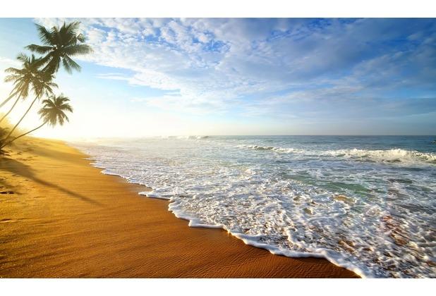 papermoon Fototapete Palm Beach Sri Lanka 7 Bahnen 350 x 260 cm Vlies