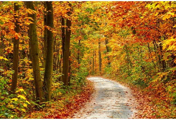 papermoon Fototapete Pathway in Colorful Autumn Forest 7 Bah 350 x 260 cm Vlies