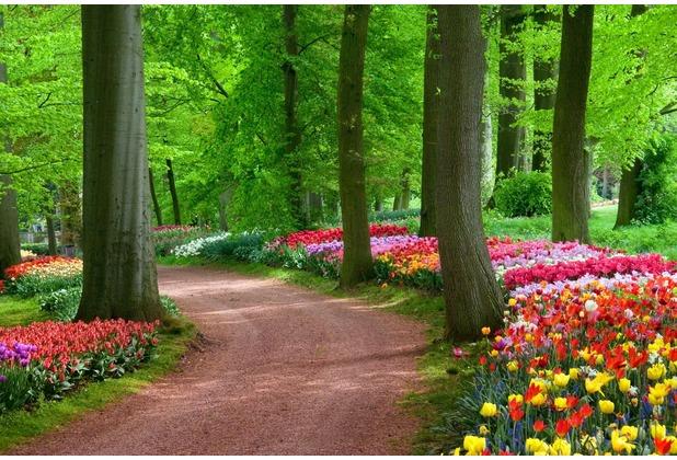 papermoon Fototapete Tulips Spring Landscape 7 Bahnen 350 x 260 cm Vlies