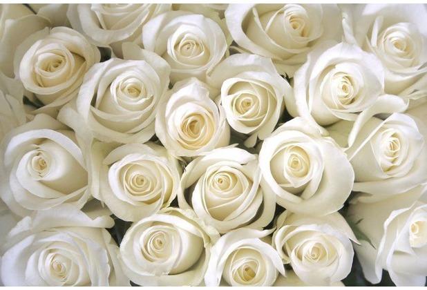 papermoon Fototapete White Roses 7 Bahnen 350 x 260 cm Vlies