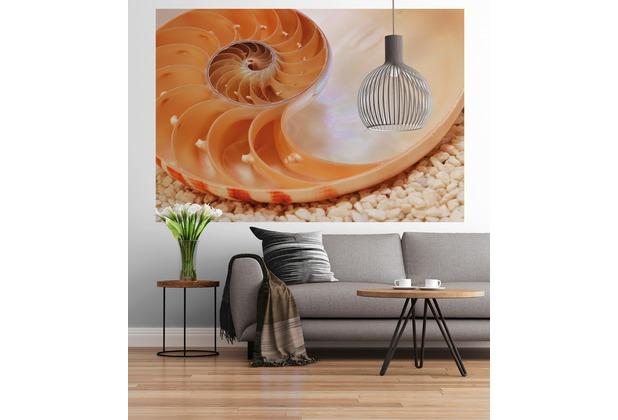 """Sunny Decor Fototapete \""""Nautilus\"""" 184 x 127 cm"""