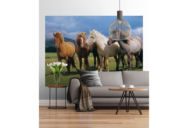 "Sunny Decor Fototapete \""Ponies\"" 254 x 184 cm"