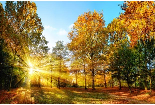XXLwallpaper Fototapete Autumn Forest 1 150 g Vlies Basic 2,00 m x 1,33 m