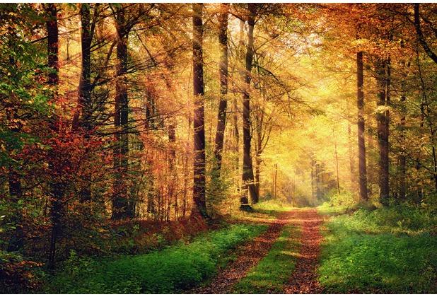 XXLwallpaper Fototapete Autumn Forest 2 150 g Vlies Basic 2,00 m x 1,33 m