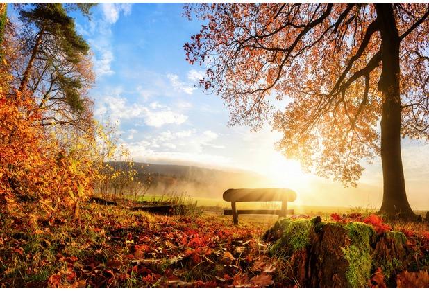 XXLwallpaper Fototapete Autumn Morning 150 g Vlies Basic 2,00 m x 1,33 m