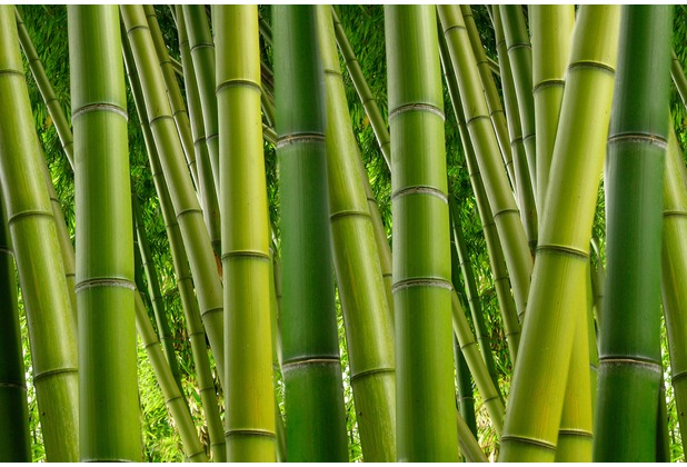 xxlwallpaper fototapete bambus 2. Black Bedroom Furniture Sets. Home Design Ideas