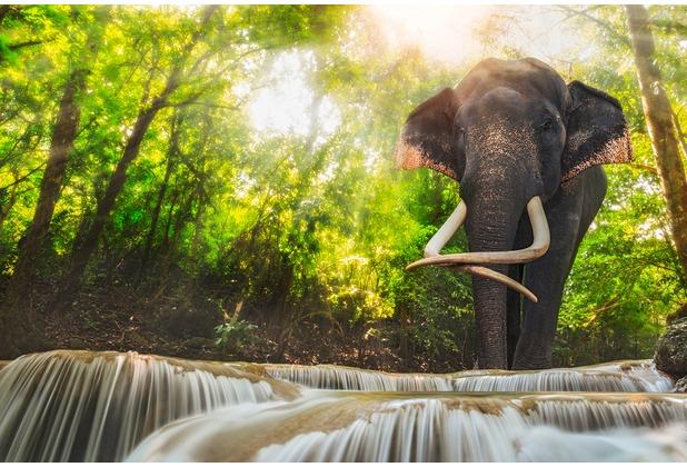 XXLwallpaper Fototapete Erawan Waterfall 472-607-XXL 150 g Vlies Basic 2,00 m x 1,33 m