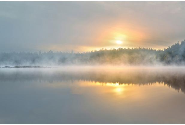 XXLwallpaper Fototapete Foggy Morning 150 g Vlies Basic 2,00 m x 1,33 m