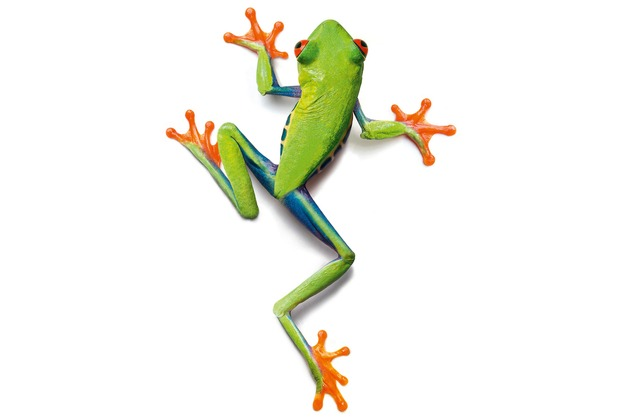 XXLwallpaper Fototapete Frog 150 g Vlies Basic 2,00 m x 1,33 m
