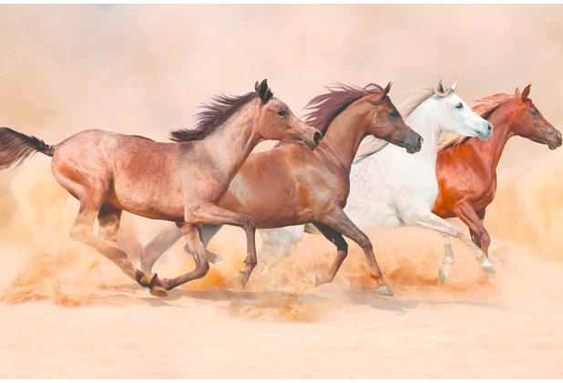 XXLwallpaper Fototapete Herd Gallops 150 g Vlies Basic 2,00 m x 1,33 m