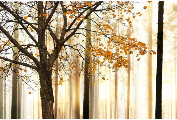 XXLwallpaper Fototapete Tree Detail 150 g Vlies Basic 2,00 m x 1,33 m