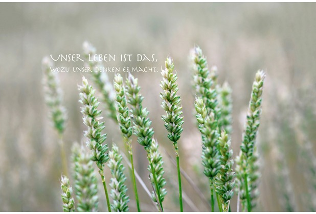 XXLwallpaper Fototapete Unser Leben...Text 150 g Vlies Basic 2,00 m x 1,33 m