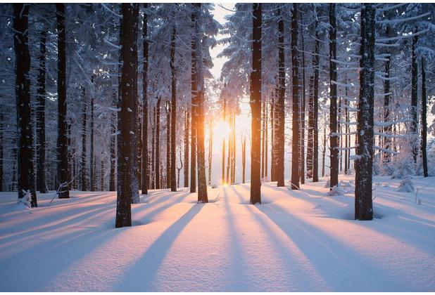 XXLwallpaper Fototapete Winter Forest 150 g Vlies Basic 2,00 m x 1,33 m