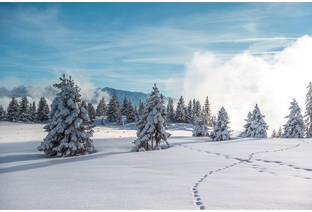 XXLwallpaper Fototapete Winter Forest 1 150 g Vlies Basic 2,00 m x 1,33 m
